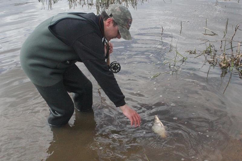 В средней полосе России обитает огромное множество видов Рыбы, которых можно поймать на мушку
